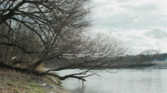 A broken tree hanging over a wavy river. Winter landscape - stock footage