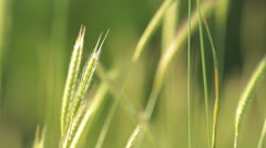 Blurred grass with green field and mountain background, HDR shot - stock footage