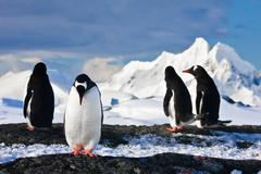 penguins  on a rock in Antarctica - stock photo