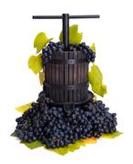 Traditional manual grape pressing utensil with blue grapes - stock photo