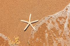 White starfish on sand Stock Photos