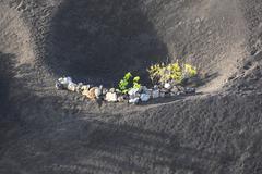 A vineyard in Lanzarote island, growing on volcanic soil - stock photo