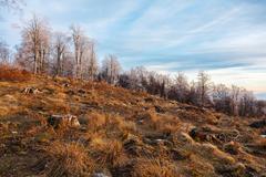 Deforestation in Romania Stock Photos