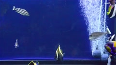 Various fishes swimming in aquarium with pump Stock Footage