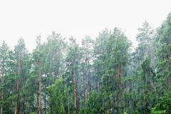 Deluges of rain in forest Stock Photos