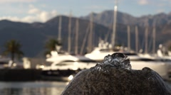 Fountain and yachts Stock Footage