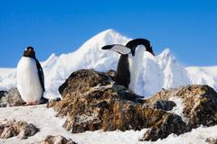 Penguins on a rock Stock Photos