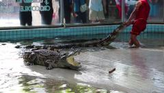 Crocodile show in Pattaya, Thailand Stock Footage