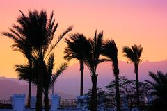 silhouette of palm trees - stock photo