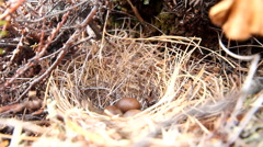 Cozy nest Stock Footage