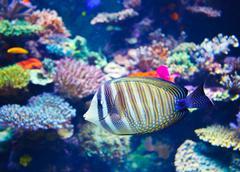 Colorful aquarium Stock Photos