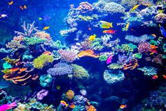 Colorful aquarium - stock photo