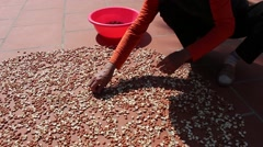 Peanuts in hand after a good harvest of successful farmers Stock Footage