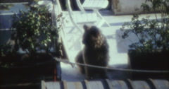 Paris Lifestyle 70s 80s Seine 16mm Stock Footage