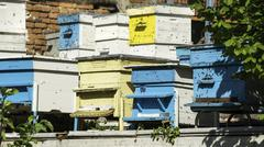 Swarm of bees fly to beehive Stock Photos
