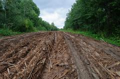 Wet dirt road with piles of woody debris - stock photo
