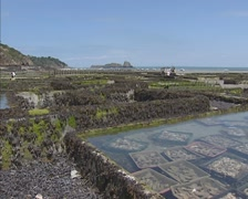 Fresh Oyster harvest in special ponds, claires + pan cliff Rocher de Cancale Stock Footage