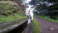Cat following hiking girl Madeira rainforest levada walk - stock footage