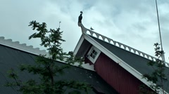 Iceland city of Reykjavik 020 typical Icelandic roof with doves Stock Footage