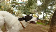 dogs play and run - stock footage