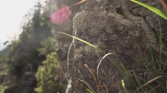 SLOWMOTION Rocks With Grass And Lens Flare Stock Footage