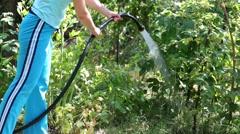 Hands of young woman hosing raspberries bushes in summer garden Stock Footage