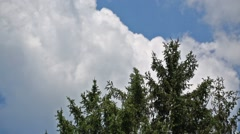 Top of tree swaying in wind and clouds floating in sky Stock Footage