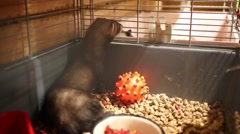 Little black otter sits in cage with food in animals store Stock Footage