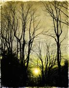 Sunset behind the bare branches - stock illustration