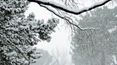 Snow accumulating on the tree branches during heavy snow storm - stock footage