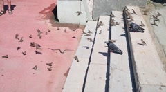 Water snake creeps next to stairs and lots of sparrows and pigeon Stock Footage