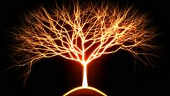 Tree of Light Particles - Red Stock Footage