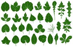 Stock Illustration of Illustration of different leaves