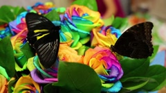 Two big butterflies sit on bouquet of rainbow roses Stock Footage