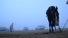 Silhouette of Horse in the desert Stock Footage
