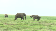 Kenya, Amboseli National Park, Elephants - stock footage