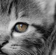 Stock Photo of Tabby kitten