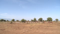 Kenya, Maasai With Goats In Field Stock Footage