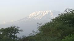 Kenya, Amboseli National Park, Mt  Kilimanjaro Behind Trees - stock footage