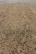 vertical photo of the surface of the field - stock photo