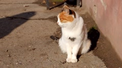 Pussy cat sitting in the street on the bright sun full HD footage Stock Footage