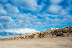 Ammophila arenaria, Marram grass growing in the dunes on the Dutch North Sea - stock photo