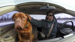 4k man driving with his happy french mastiff Stock Footage