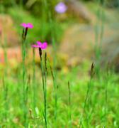 Flower detail Stock Photos