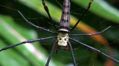 Huge Jungle Spider Zoom Out Stock Footage