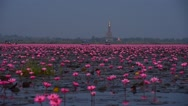 Stock Video Footage of Sea of pink lotus,Nong Han, Udon Thani, Thailand (unseen in Thailand)