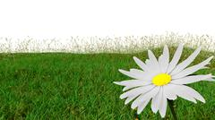 Spring background with grass and aster isolated on white Stock Illustration