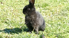 Black Cute Rabbit Jumping Out Of The Shot Stock Footage