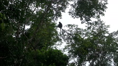 Lonesome Monkey Stock Footage