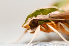 Moth in the nature - stock photo